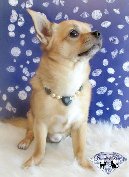 """Jewels4Pets dog necklace """"Sweetheart"""""""