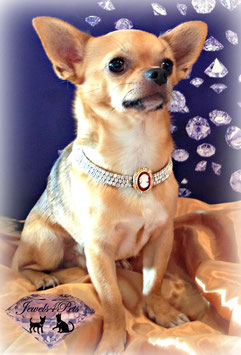 "Jewels4Pets dog necklace ""Queen"""
