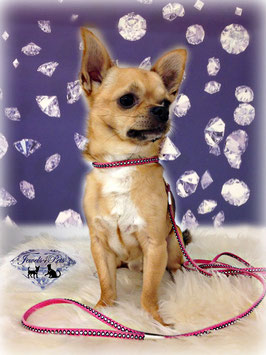 """Jewels4Pets luxury dog necklace & leash """"Beverly Hills"""" with sparkling Swarovski Crystals"""