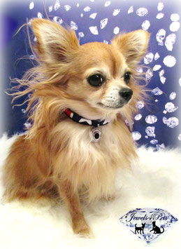 "Jewels4Pets jewelry dog collar ""American Beauty"""