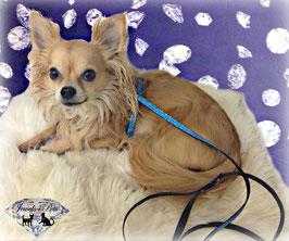 "Jewels4Pets luxury Set dog harness & leash ""Universe"""