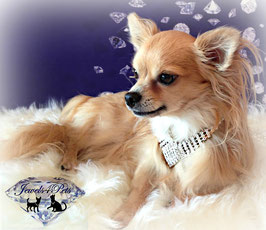 """Jewels4Pets dog necklace """"Beverly Hills"""""""