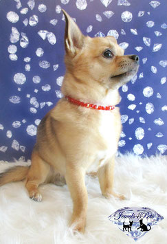 """Jewels4Pets dog necklace """"California"""""""