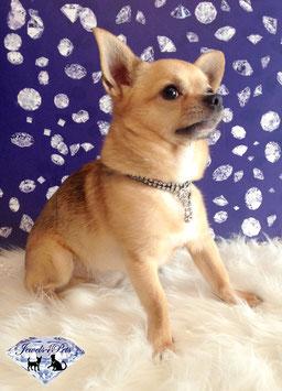"Jewels4Pets luxury jewelry dog collar ""Miami"""