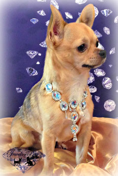 "Jewels4Pets dog necklace ""Prince"""