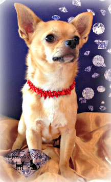 "Jewels4Pets Luxury dog necklace ""Caribian"" real coral"