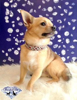 "Jewels4Pets luxury jewelry dog collar ""Palace"""