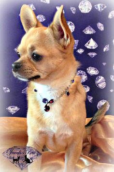 "Jewels4Pets dog necklace                 ""Puerto Rico"""