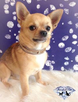 "Jewels4Pets luxury jewelry dog collar ""Fairy"""
