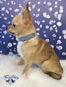 "Jewels4Pets luxury jewelry dog collar ""Heaven"""