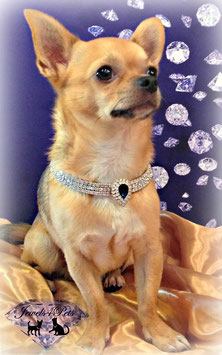 "Jewels4Pets dog necklace ""Rico"""