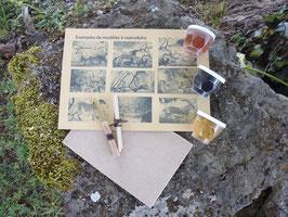 Kit peinture préhistorique