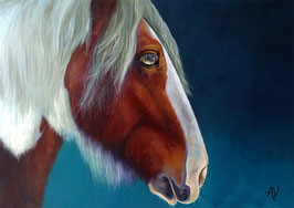 Art print ~ Irish Cob