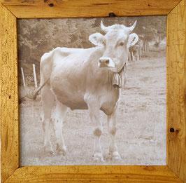 Allgäuer Kuh auf Leinwand, Sepiabraun
