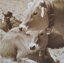 Allgäuer Kühe auf Leinwand im Spannrahmen,  Farbe: Sepiabraun  L 50cm x B 50 cm