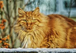 Großer gesundheitscheck Katze