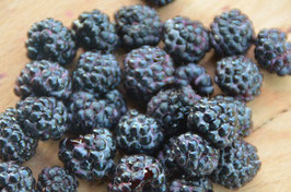 Rubus 'Black Jewel' - Sommerhimbeere