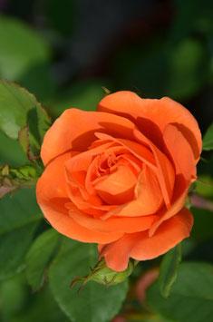 Orange Dawn