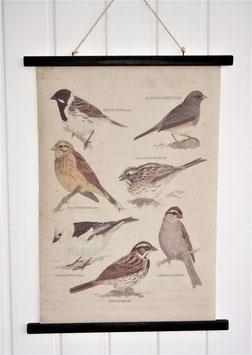 Wandkarte Singvögel