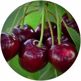Jus de pomme cerise (4 x 3 litres)