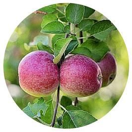 Jus de pomme (4 x 3 litres)