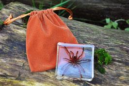Vogelspinnen vervelling in epoxy middel