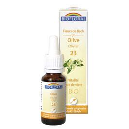 Olive n°23 - Olivier