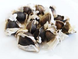 100 semillas de Moringa Oleifera
