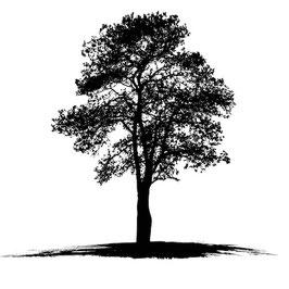 Läsergravur Baum-1