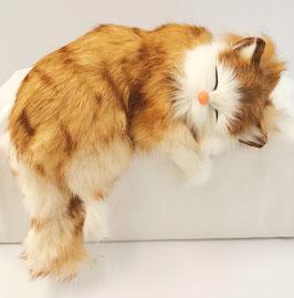 Katze für Gestell