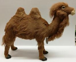 Kamel XL
