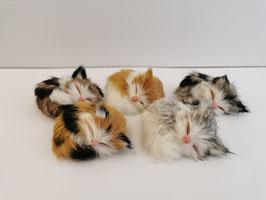 Katze kein schlafend