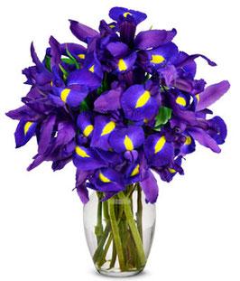 AZUL (40 iris)