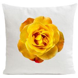 ORANGE ROSE - WHITE