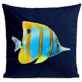 BUTTERFLY FISH - DEEP BLUE