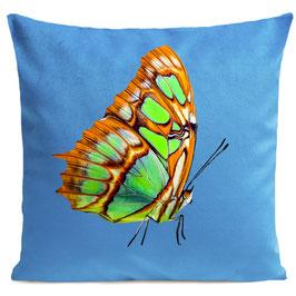 ORANGE BUTTERFLY - BRIGHT BLUE