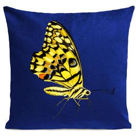 YELLOW BUTTERFLY - KLEIN BLUE