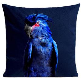 PUNKY PARROT - DEEP BLUE