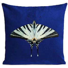 ZEBRA BUTTERFLY  - KLEIN BLUE