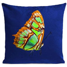 ORANGE BUTTERFLY - KLEIN BLUE