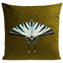 ZEBRA BUTTERFLY  - OLIVE GREEN