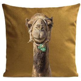 Smiling Camel - MUSTARD