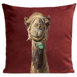 Smiling Camel - GARNET