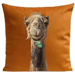 Smiling Camel - RUST