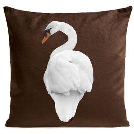 WHITE SWAN - BROWN