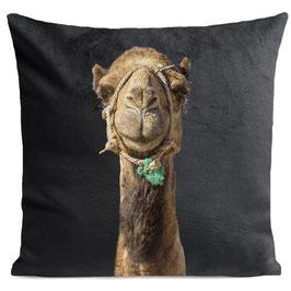 SMILING CAMEL - SLATE GREY