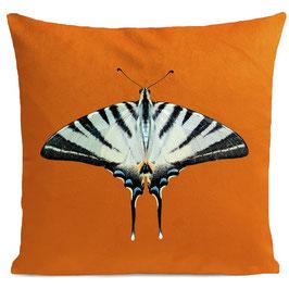 ZEBRA BUTTERFLY  - BRIGHT ORANGE