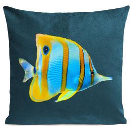 BUTTERFLY FISH - SCANDINAVIAN BLUE