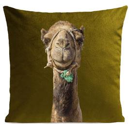 Smiling Camel - OLIVRE GREEN
