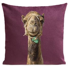 Smiling Camel - PLUM